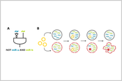 Designing miRNA-based cell classifier circuits using different approaches